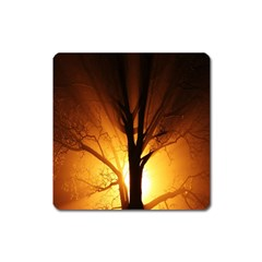 Rays Of Light Tree In Fog At Night Square Magnet