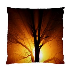 Rays Of Light Tree In Fog At Night Standard Cushion Case (two Sides)