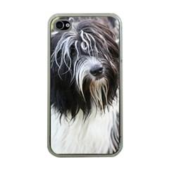 Schapendoes Apple iPhone 4 Case (Clear)