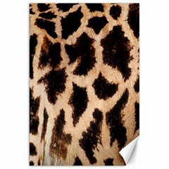 Yellow And Brown Spots On Giraffe Skin Texture Canvas 20  x 30