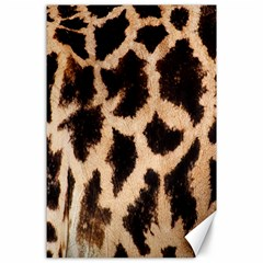 Yellow And Brown Spots On Giraffe Skin Texture Canvas 24  X 36