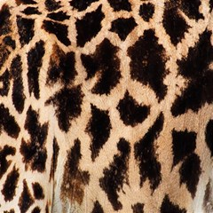 Yellow And Brown Spots On Giraffe Skin Texture Magic Photo Cubes