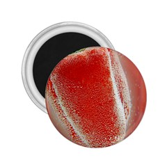Red Pepper And Bubbles 2.25  Magnets