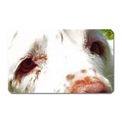 Clumber Spaniel Eyes Magnet (Rectangular)