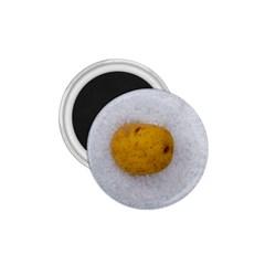 Hintergrund Salzkartoffel 1 75  Magnets