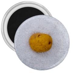 Hintergrund Salzkartoffel 3  Magnets
