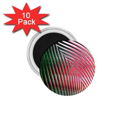 Watermelon Dream 1 75  Magnets (10 Pack)