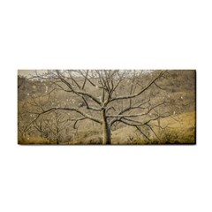 Ceiba Tree At Dry Forest Guayas District   Ecuador Cosmetic Storage Cases