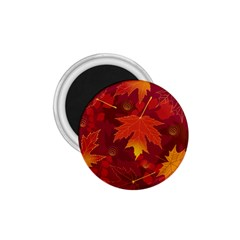 Autumn Leaves Fall Maple 1 75  Magnets