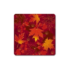 Autumn Leaves Fall Maple Square Magnet