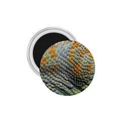 Macro Of Chameleon Skin Texture Background 1 75  Magnets