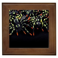 Colorful Spiders For Your Dark Halloween Projects Framed Tiles