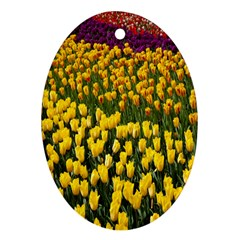 Colorful Tulips In Keukenhof Gardens Wallpaper Ornament (Oval)