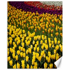 Colorful Tulips In Keukenhof Gardens Wallpaper Canvas 16  x 20