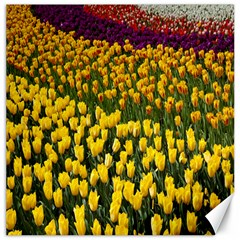 Colorful Tulips In Keukenhof Gardens Wallpaper Canvas 20  X 20