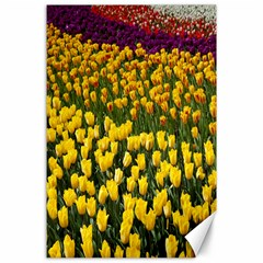 Colorful Tulips In Keukenhof Gardens Wallpaper Canvas 24  X 36