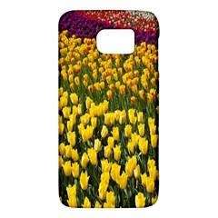 Colorful Tulips In Keukenhof Gardens Wallpaper Galaxy S6
