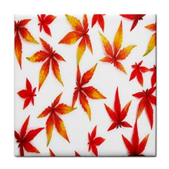 Colorful Autumn Leaves On White Background Tile Coasters