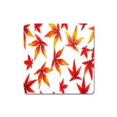 Colorful Autumn Leaves On White Background Square Magnet