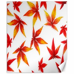 Colorful Autumn Leaves On White Background Canvas 8  X 10