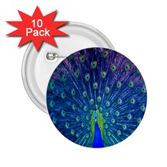 Amazing Peacock 2 25  Buttons (10 Pack)