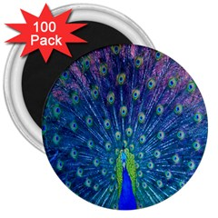 Amazing Peacock 3  Magnets (100 Pack)