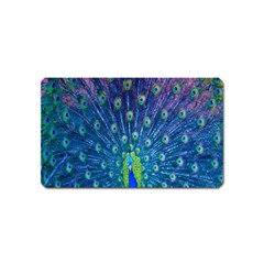 Amazing Peacock Magnet (name Card)