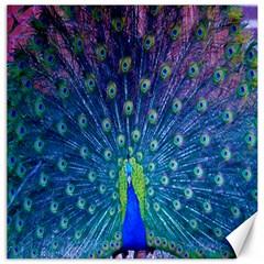 Amazing Peacock Canvas 16  X 16