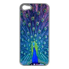 Amazing Peacock Apple Iphone 5 Case (silver)
