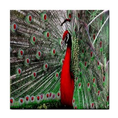 Red Peacock Tile Coasters