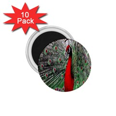 Red Peacock 1.75  Magnets (10 pack)