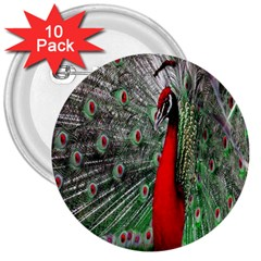Red Peacock 3  Buttons (10 Pack)