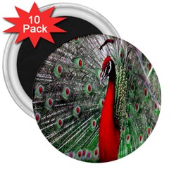 Red Peacock 3  Magnets (10 Pack)