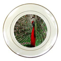Red Peacock Porcelain Plates