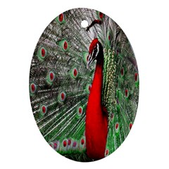 Red Peacock Oval Ornament (Two Sides)
