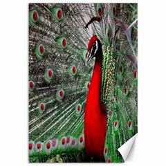 Red Peacock Canvas 12  X 18