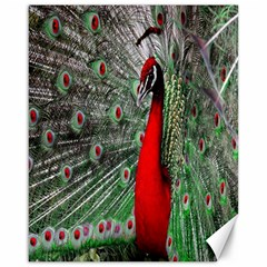 Red Peacock Canvas 16  X 20