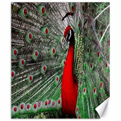 Red Peacock Canvas 20  X 24