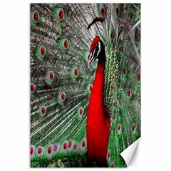 Red Peacock Canvas 24  X 36