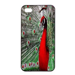 Red Peacock Apple Iphone 4/4s Seamless Case (black)