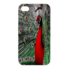 Red Peacock Apple iPhone 4/4S Hardshell Case