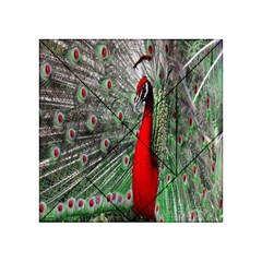 Red Peacock Acrylic Tangram Puzzle (4  x 4 )