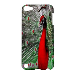 Red Peacock Apple iPod Touch 5 Hardshell Case