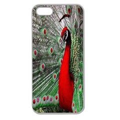 Red Peacock Apple Seamless iPhone 5 Case (Clear)