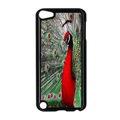 Red Peacock Apple iPod Touch 5 Case (Black)