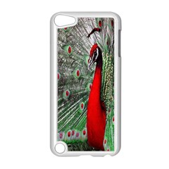 Red Peacock Apple iPod Touch 5 Case (White)