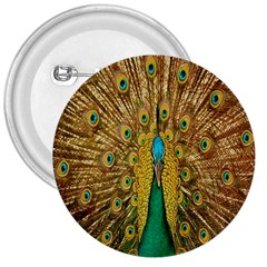 Peacock Bird Feathers 3  Buttons