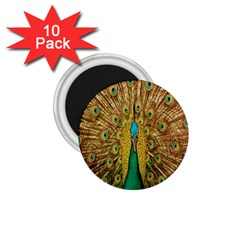 Peacock Bird Feathers 1 75  Magnets (10 Pack)