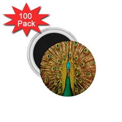 Peacock Bird Feathers 1.75  Magnets (100 pack)