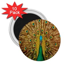 Peacock Bird Feathers 2 25  Magnets (10 Pack)